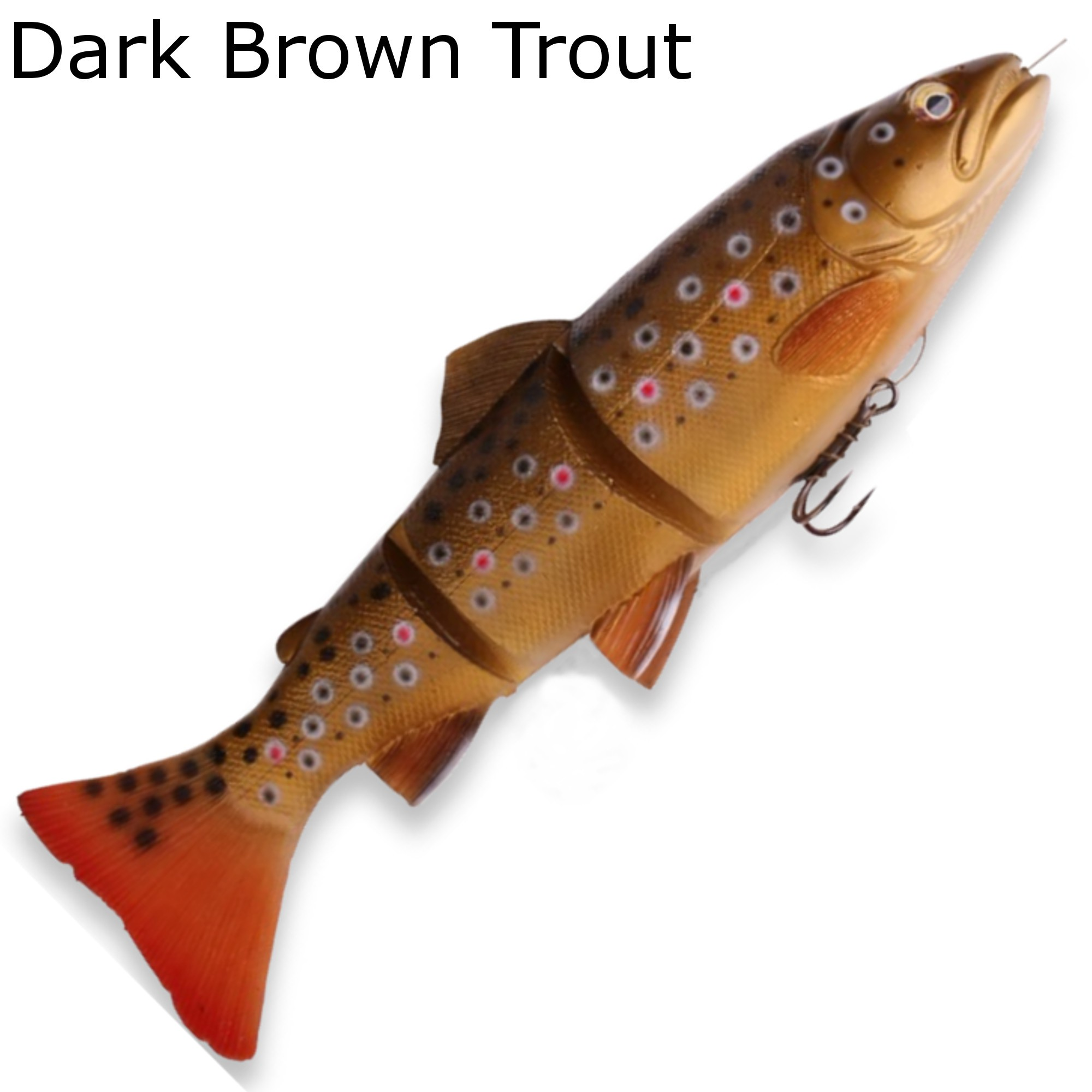 trout chat Brook trouts are found in many part of north america they are easy to identify as they have an elongated tapering body and are greenish black in color.