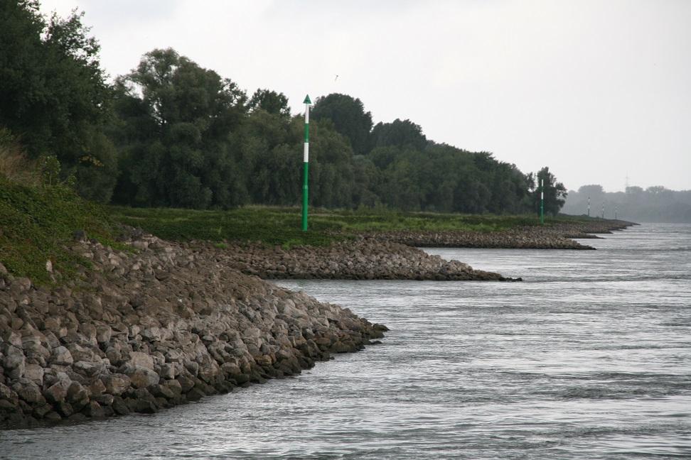 Zanderangeln am Rhein