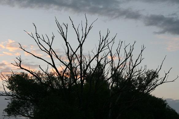 Karpfenangeln im Herbst